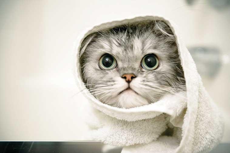gatto avvolto nell'asciugamano