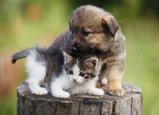 cucciolo di cane e gattino assieme