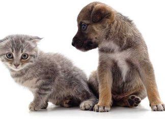 Cane e gatto patologie cuccioli