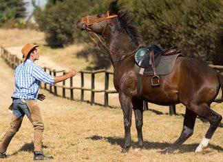 Domatore di cavalli cerca di addestrare un puledro