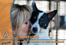 prolife LNDC kit adozione