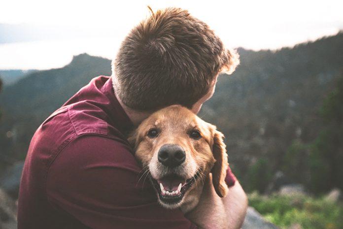 protezione antiparassitaria cane