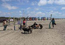 baubeach spiaggia per cani