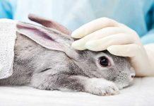 coniglio in mani sicure