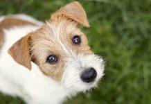 cane-dolce sguardo