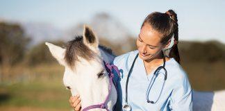 cavallo-veterinaria-miopatia-da-sforzo-copy