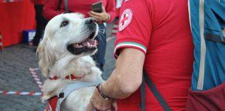 Cane addestrato super eroe dalla Croce Rossa Assieme ad un volontario