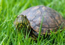 acquistare tartarughe dai negozi