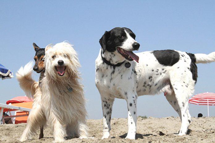 ferragosto spiaggia cani