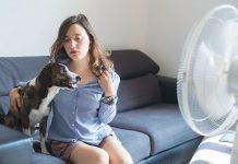 aria condizionata e animali