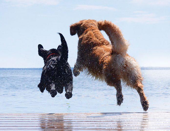cane incontra l'acqua