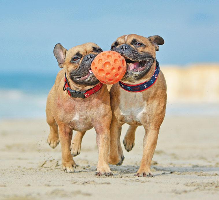 cani giocano sulla spiaggia