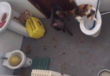 sequestro animali maltrattati