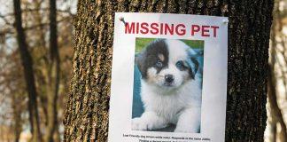 cane-e-gatoo-smarriti-missing-pets