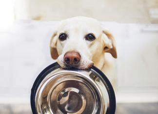 cane prevenzione salute