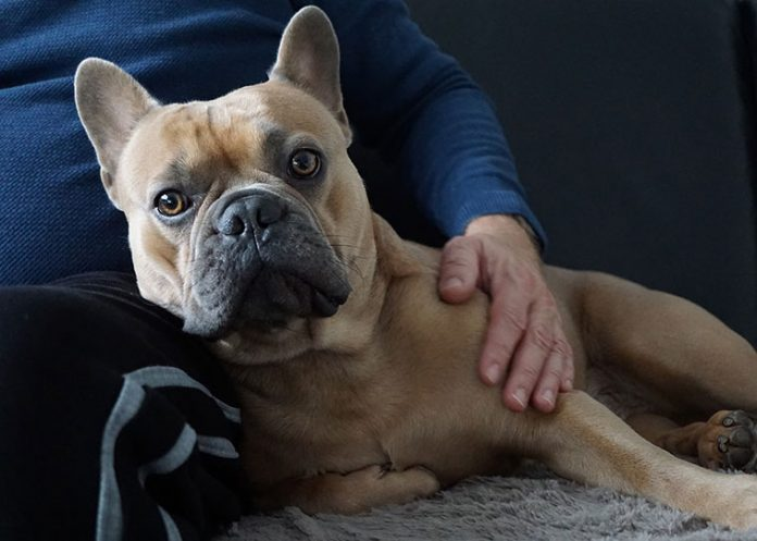 benefici cane paziente pet therapy