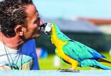 Enzo Salvi Amore per il suo pappagallo Fly