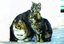 Colonia di gatti randagi