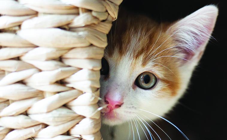 Gatto-traumatizzato-