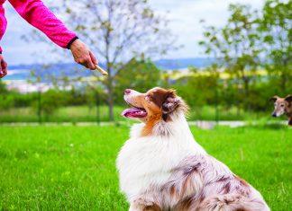Educazione-del-cane-con-rinforzo-positivo
