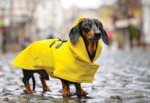 Abbigliamento per cane e gatto stagione invernale