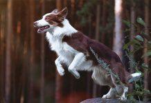 Cane atleta nel bosco