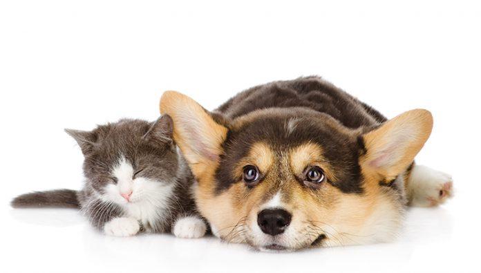 Cane e gatto assieme per il dolore