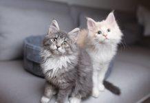 Convivenza tra gatti