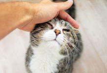 gatto anziano carezza