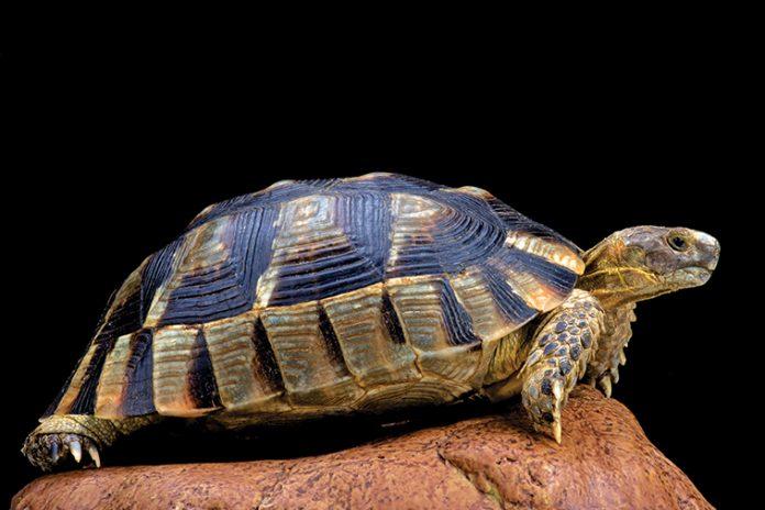 Documenti necessari per le tartarughe