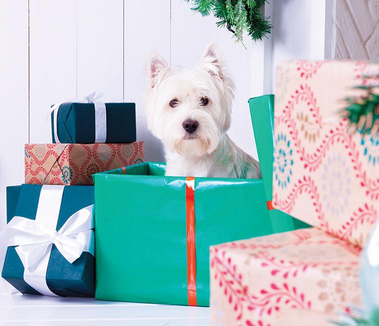 Cane bianco che rompe i pacchi dei regali di Natale