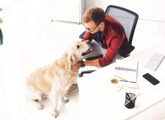 Cane in ufficio al lavoro con il proprietario