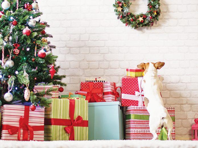 cane sotto albero cerca dei regali salute articolazioni