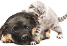 paura dei botti di fine anno per cane e gatto