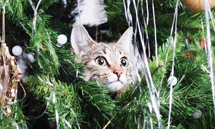 Gatto tra gli addobbi natalizi dell'albero
