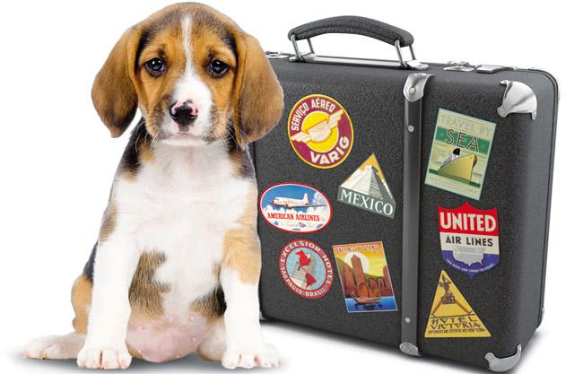 Cane con la valigia pronto a spostarsi nell'Unione Europea
