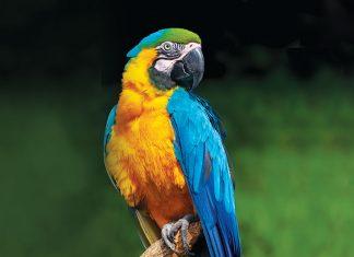 Primo piano del pappagallo Ara