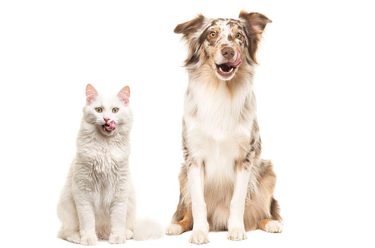 Cane e gatto che si leccano i baffi dopo il pasto con superfood