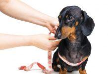 controllo dal veterinario