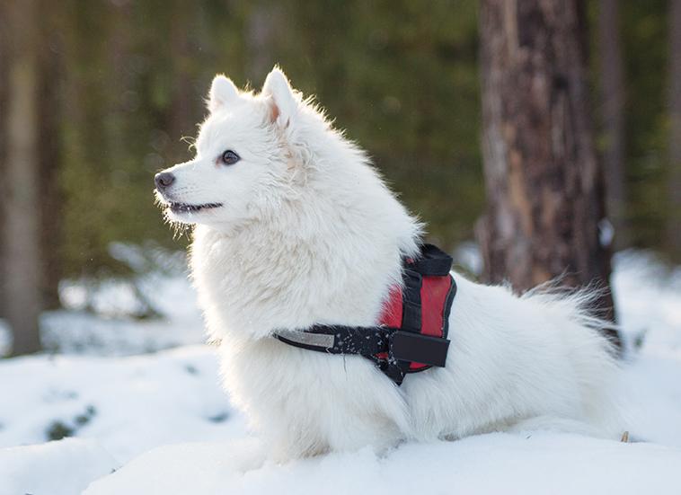 Bellissimo cane da pastore in salute sulla neve