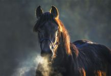Cavallo con patologie respiratorie nella nebbia