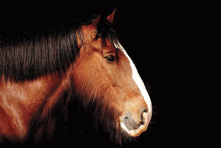 Primo piano di un cavallo con patologie respiratorie polmonari non infettive