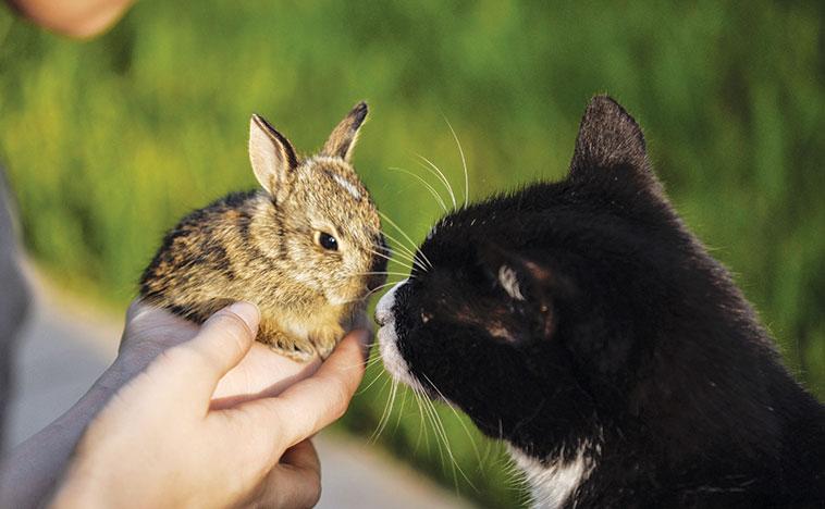 Coniglio nano con la sua padrona che cerca di fare amicizia con il gatto