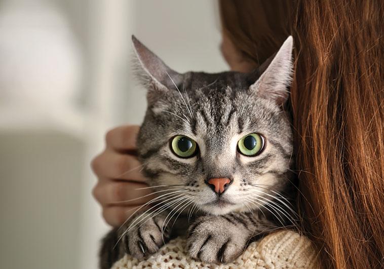 Bellissimo gatto in primo piano sulla spalla della sua padrona