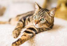 La memoria del gatto