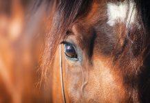 la-vista-del-cavallo