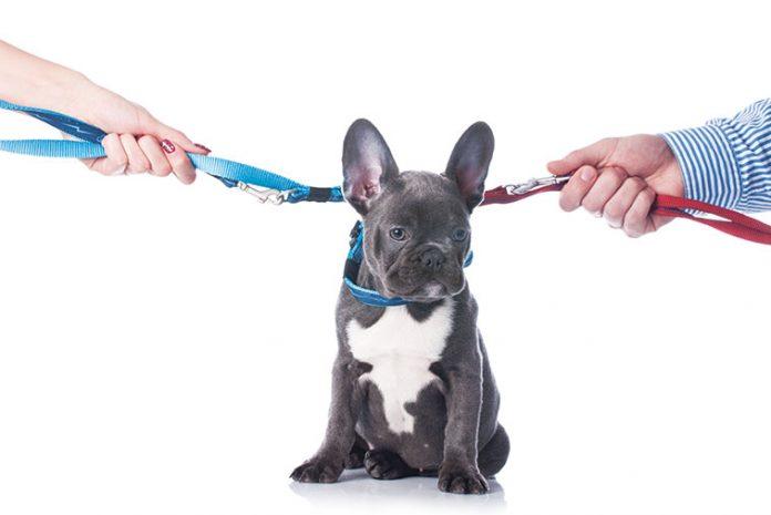 a-chi-affidare-il-cane-o-il-gatto-in-caso-di-separazione
