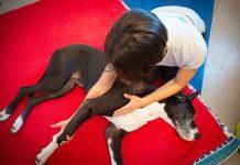cane-massaggio-articolare