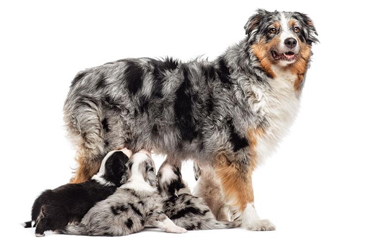 Canina con i suoi cuccioli che si stanno allattando