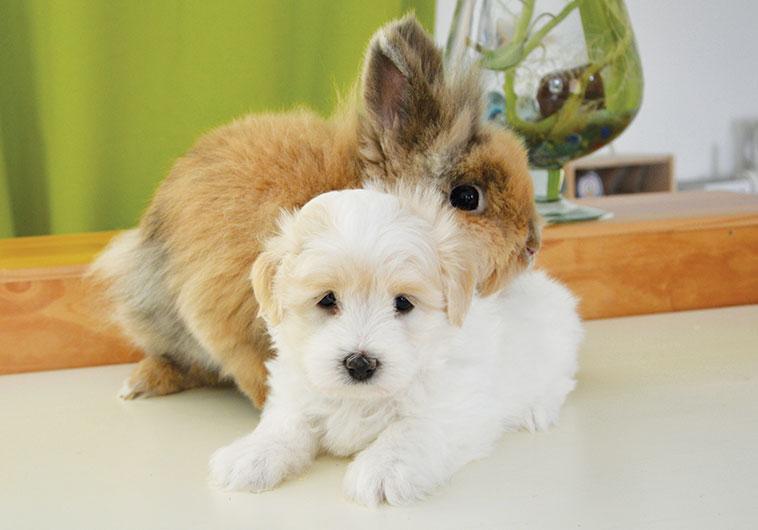 Primo piano di un coniglio che cerca di abbracciare un cane